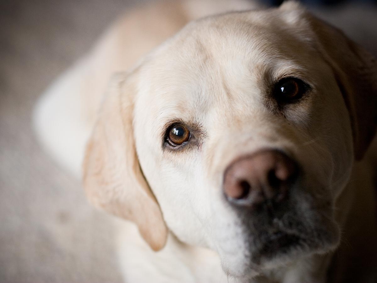 Sådan alarmsikre du et hjem med hund | SikkertHjem™ Scandinavia